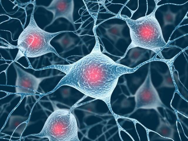 1celulele cerebrale