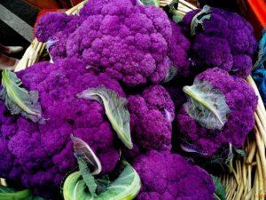 1conopida violet