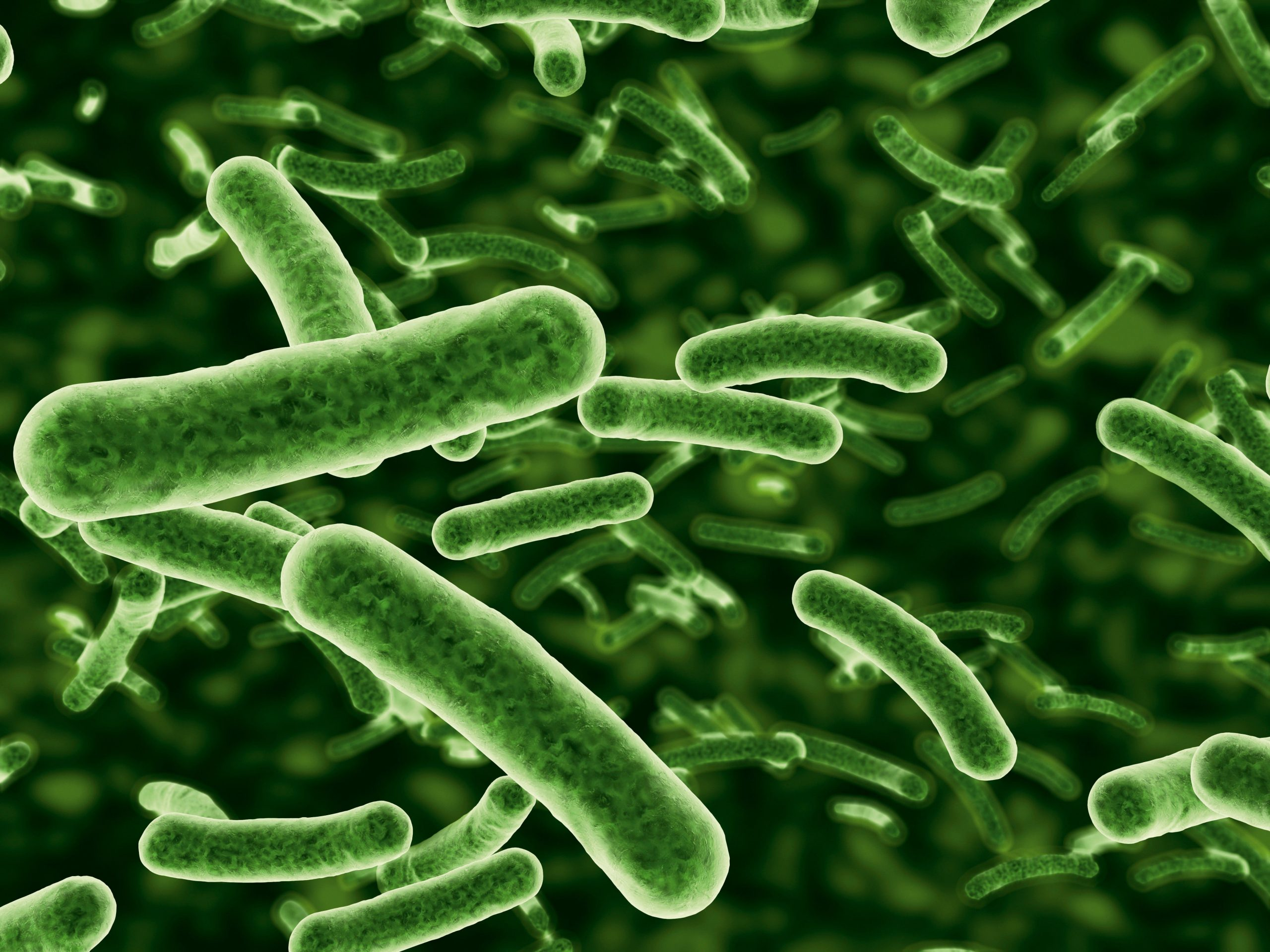 bacterii exemple