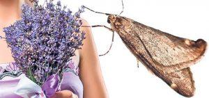 1alunga insectele