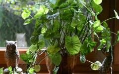 Plantele care nu trebuie sa lipseasca din casa! Vezi ce efecte incredibile au