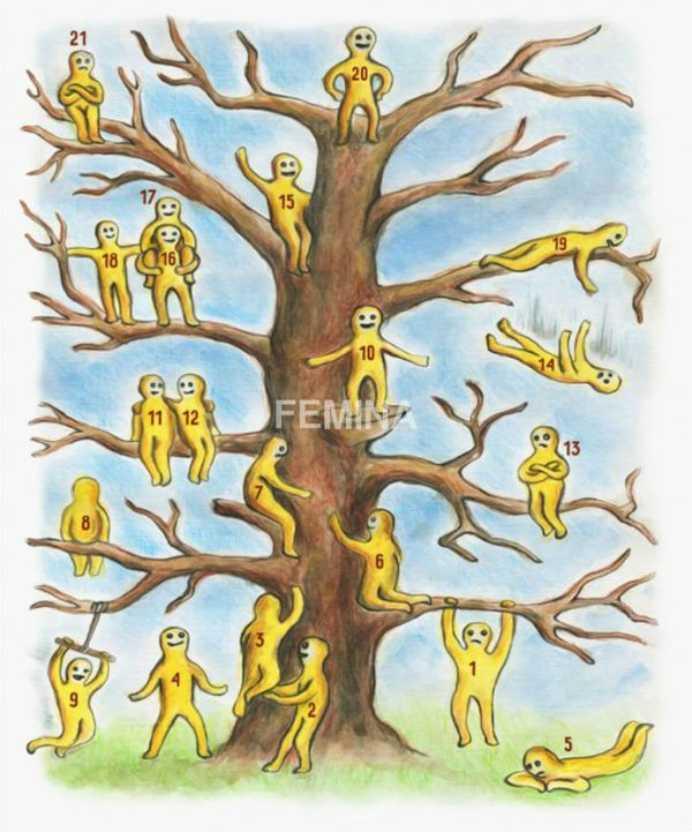 omulet copac 2