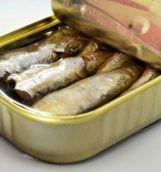 s604x0_sardine_opt_opt