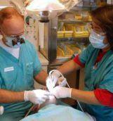 stomatolog_opt_opt
